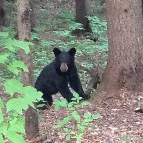 An Unexpected Guest: how to behave when a bear comes to dinner