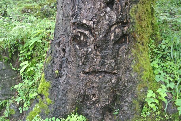 A tree with a face from our hike that day.