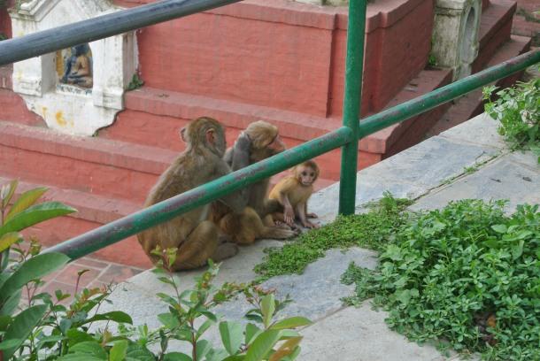 Monkeyin' Around.
