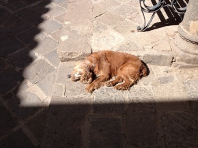 Photoessay: Dogs of Cusco