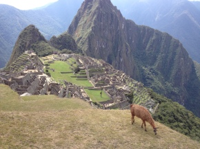 Morning at Machu Picchu